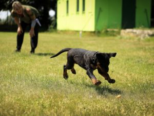 How the dog fetch, a client fetch